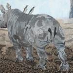 Black rhino calf close up by Omra Sian