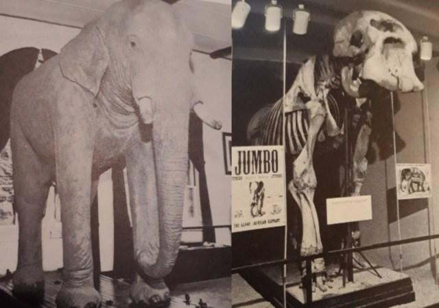 Jumbo skeleton and skin