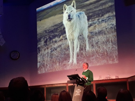 gordon buchanan talks about arctic wolves
