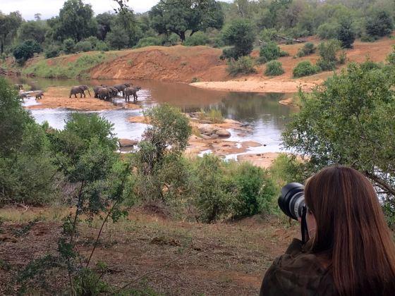 Drew Abrahamson wildlife photographs elephants