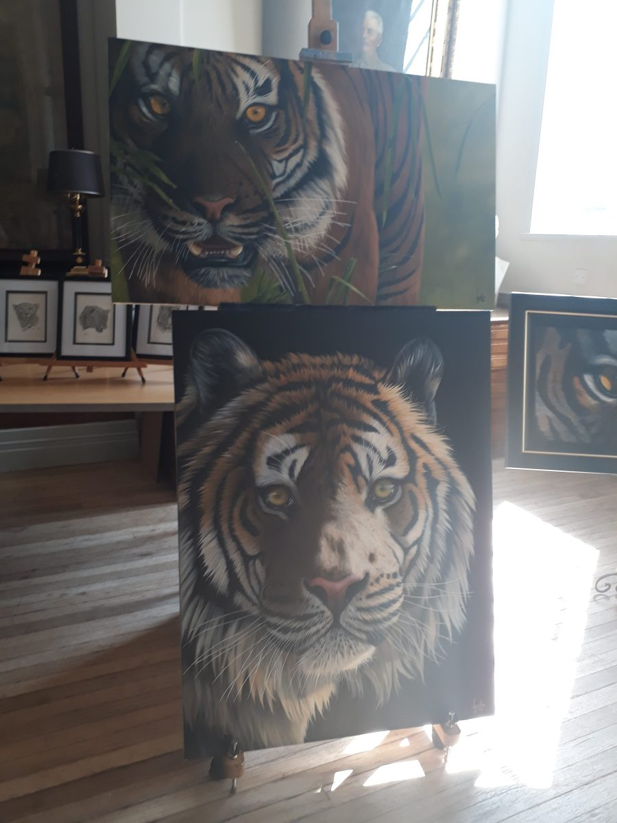 Big Cat Festival - tiger paintings on display at Royal Geographical Society