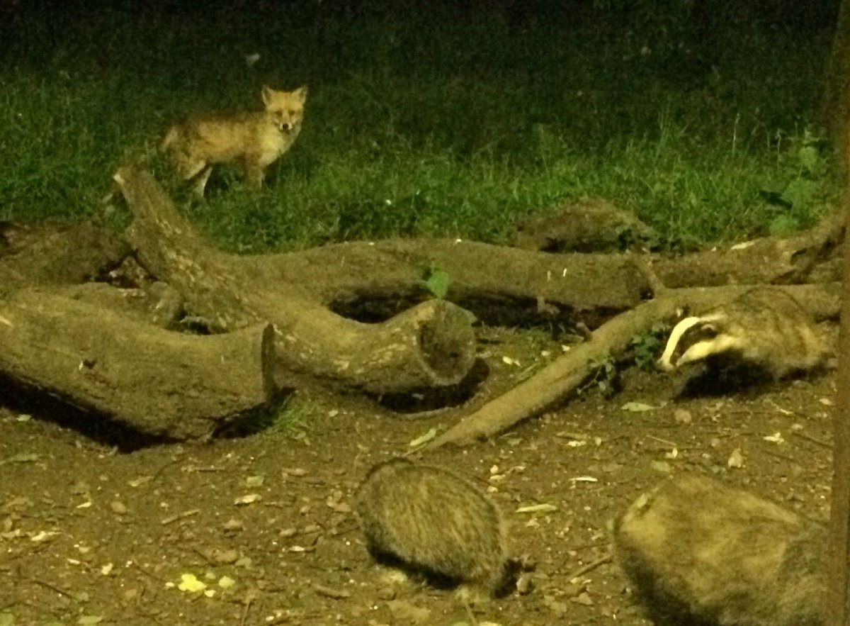 Fox-and-Badgers-Tewin-Orchard-Hertfordshire