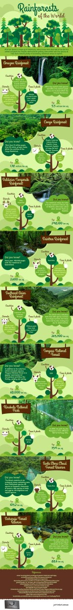 rainforests of the world infographic by todd smith