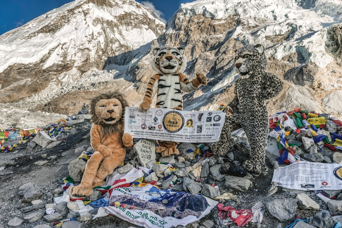 Big Cats climb Mount Everest…