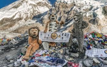 Trek-for-big-cats-climb-everest