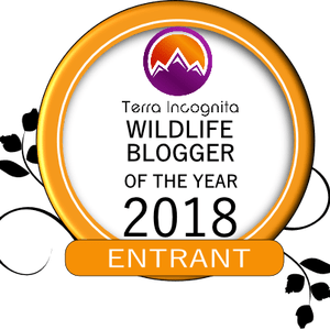 Blogger-of-the-Year-Entrant badge