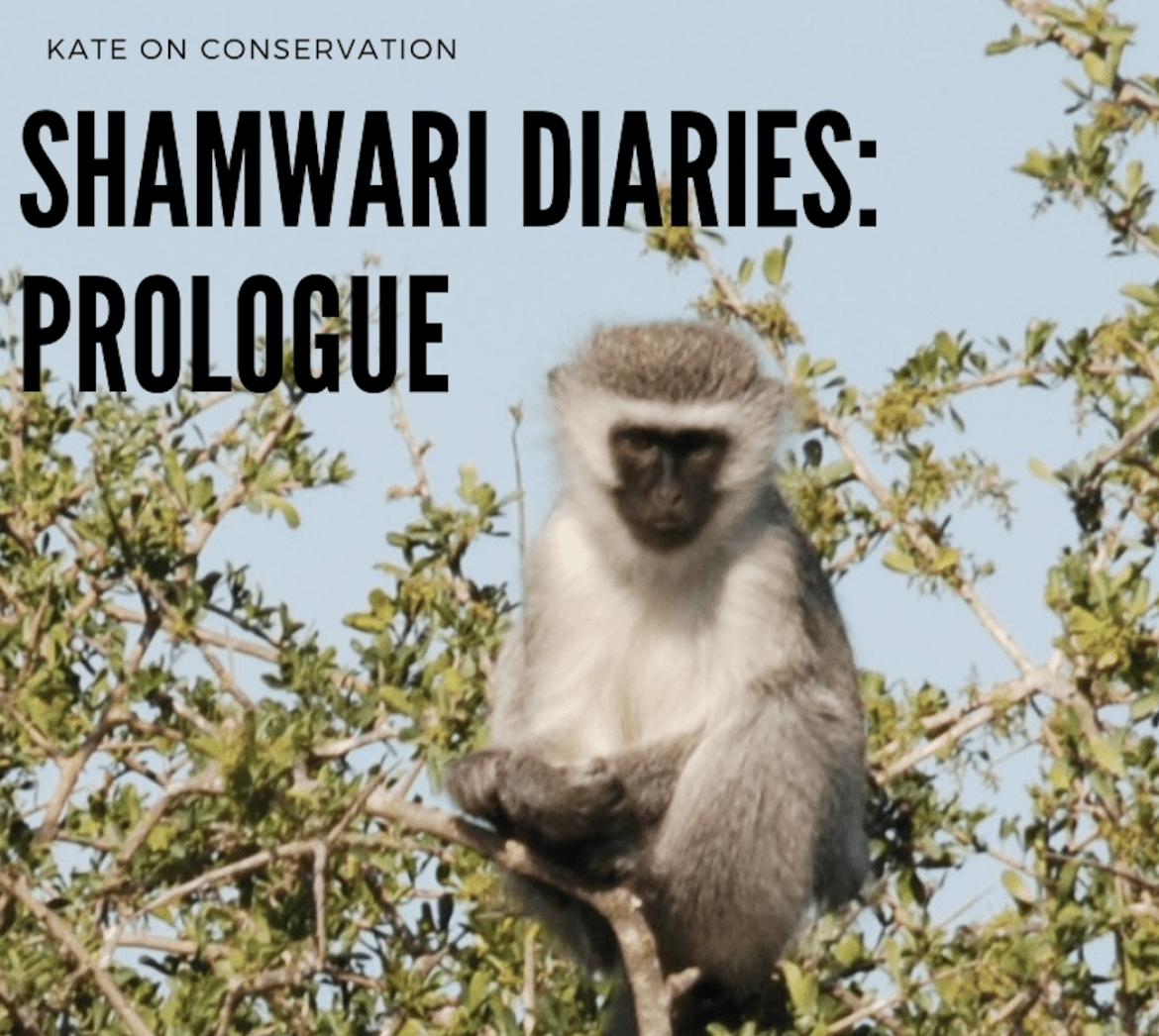 Shamwari Diaries: Prologue