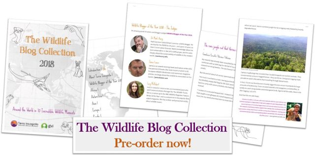 Kate-on-Conservation-Wildlife-Blog-Collection