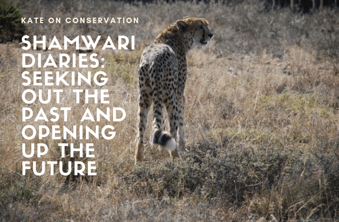 Shamwari Diaries: Act 2, Scene 1 – Seeking out the past and opening up the future