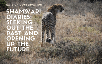 Shamwari diaries - between the past and the future title card