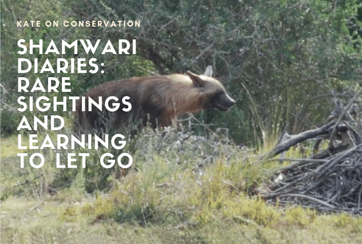 Shamwari Diaries: Act 2, Scene 2 – Learning to let go
