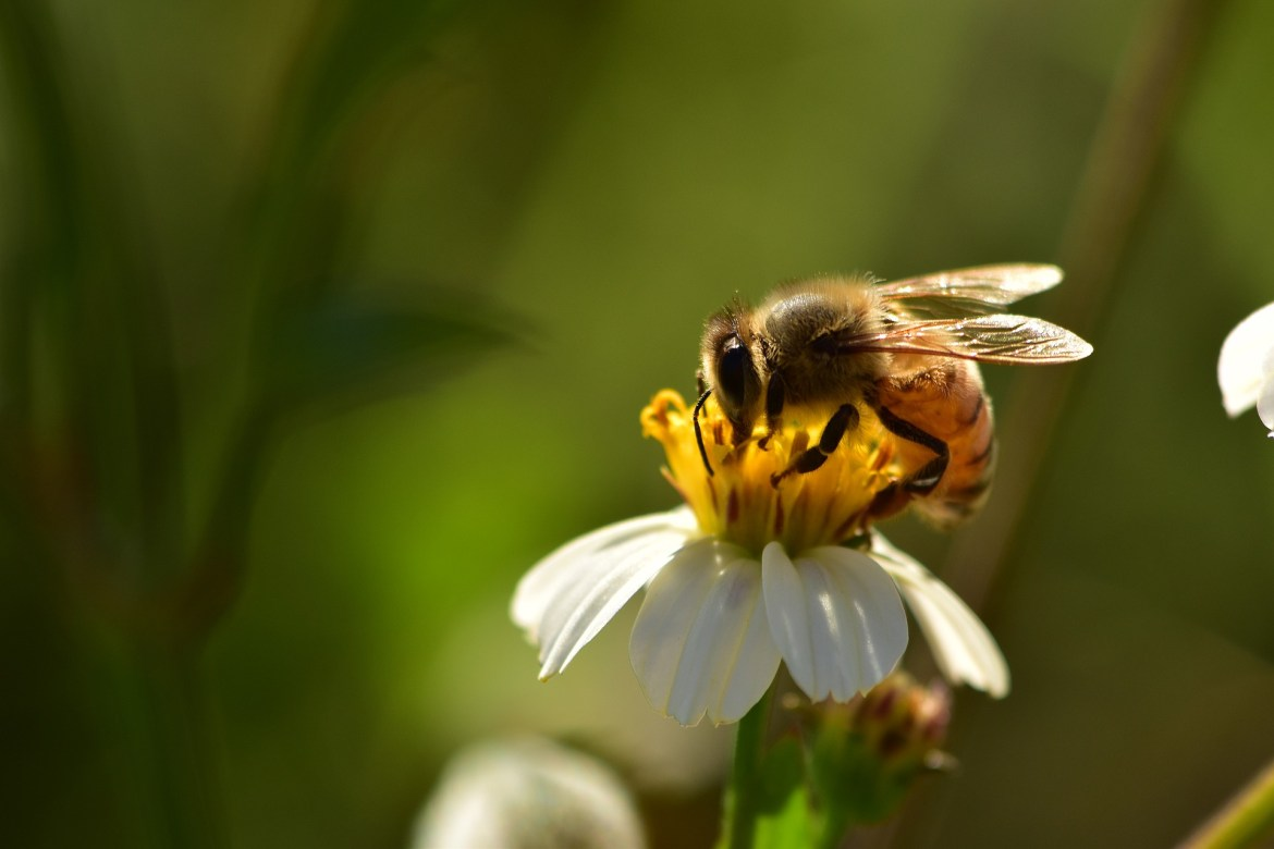 Low Carbon is striving to save the honeybee. So can you…