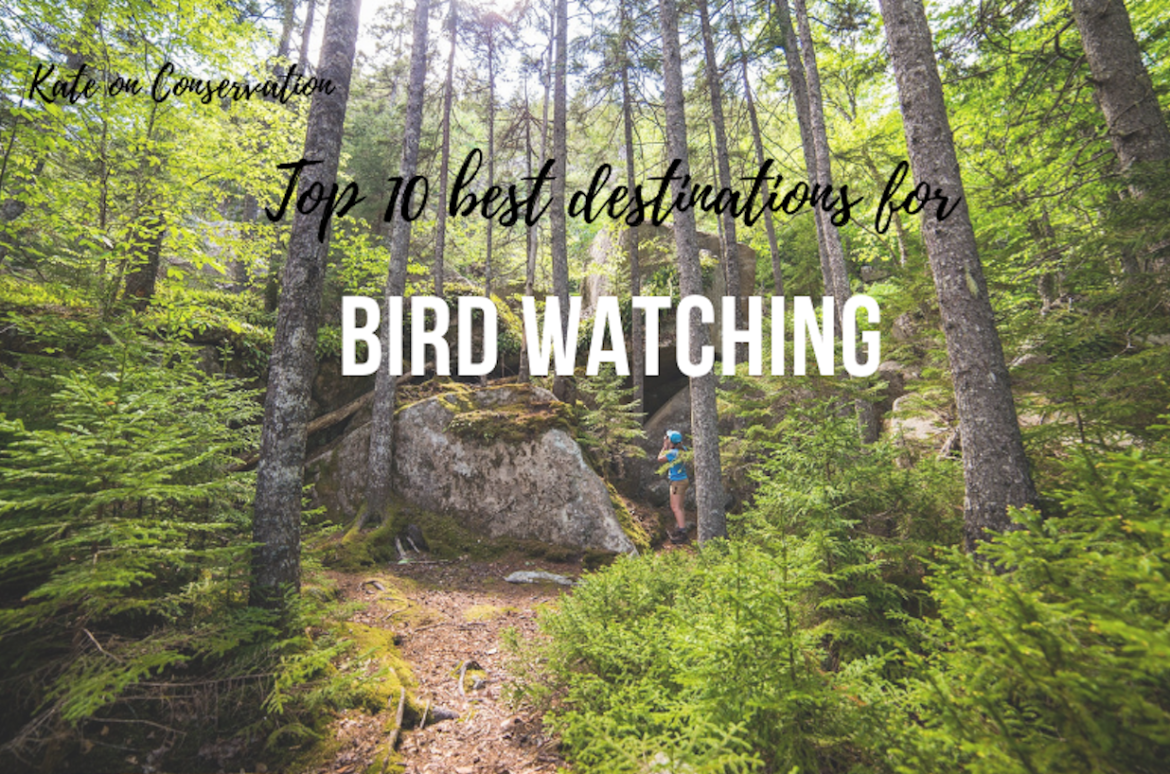 Top 10 destinations for birders