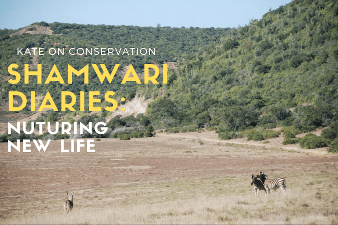Shamwari Diaries: Act 3 Scene 4 – New life