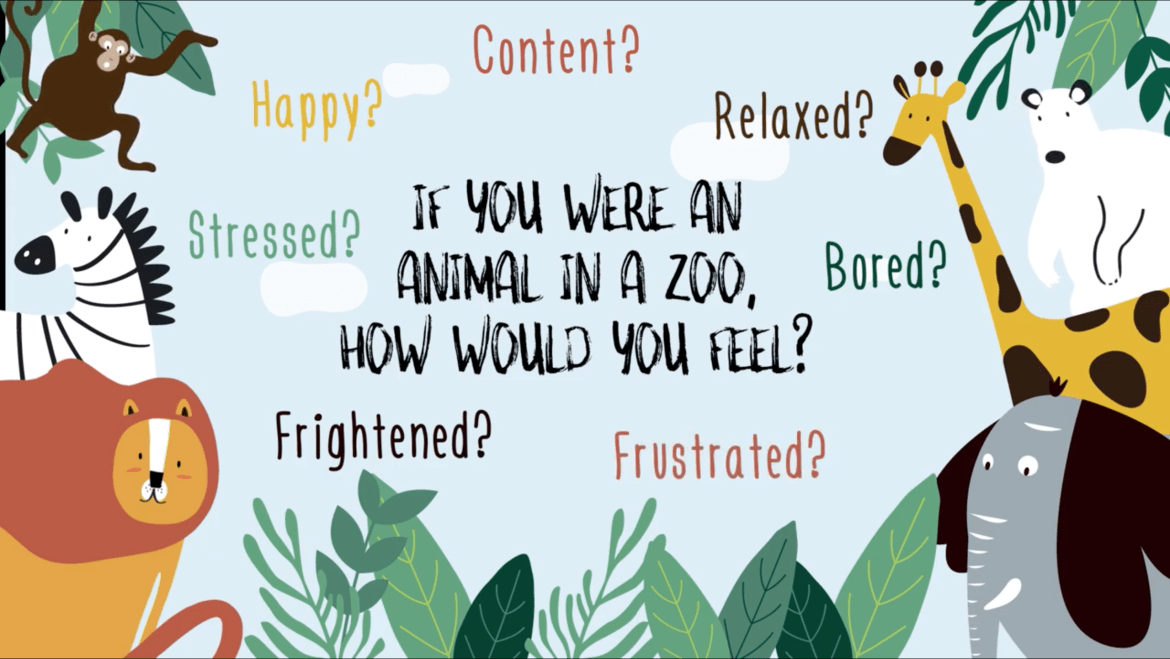 Animal emotions film raises awareness of zoo animals' welfare issues