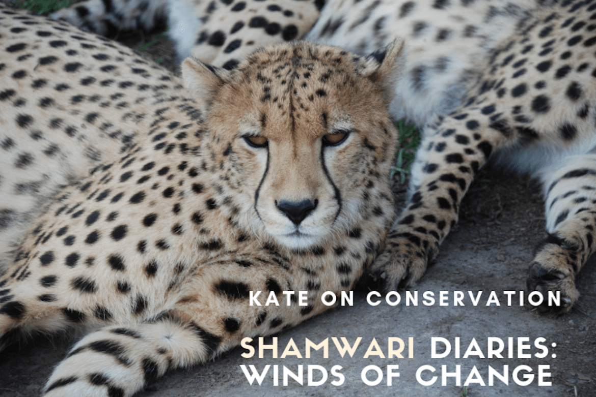 Shamwari Diaries: Act 3 Scene 5 – The winds of change