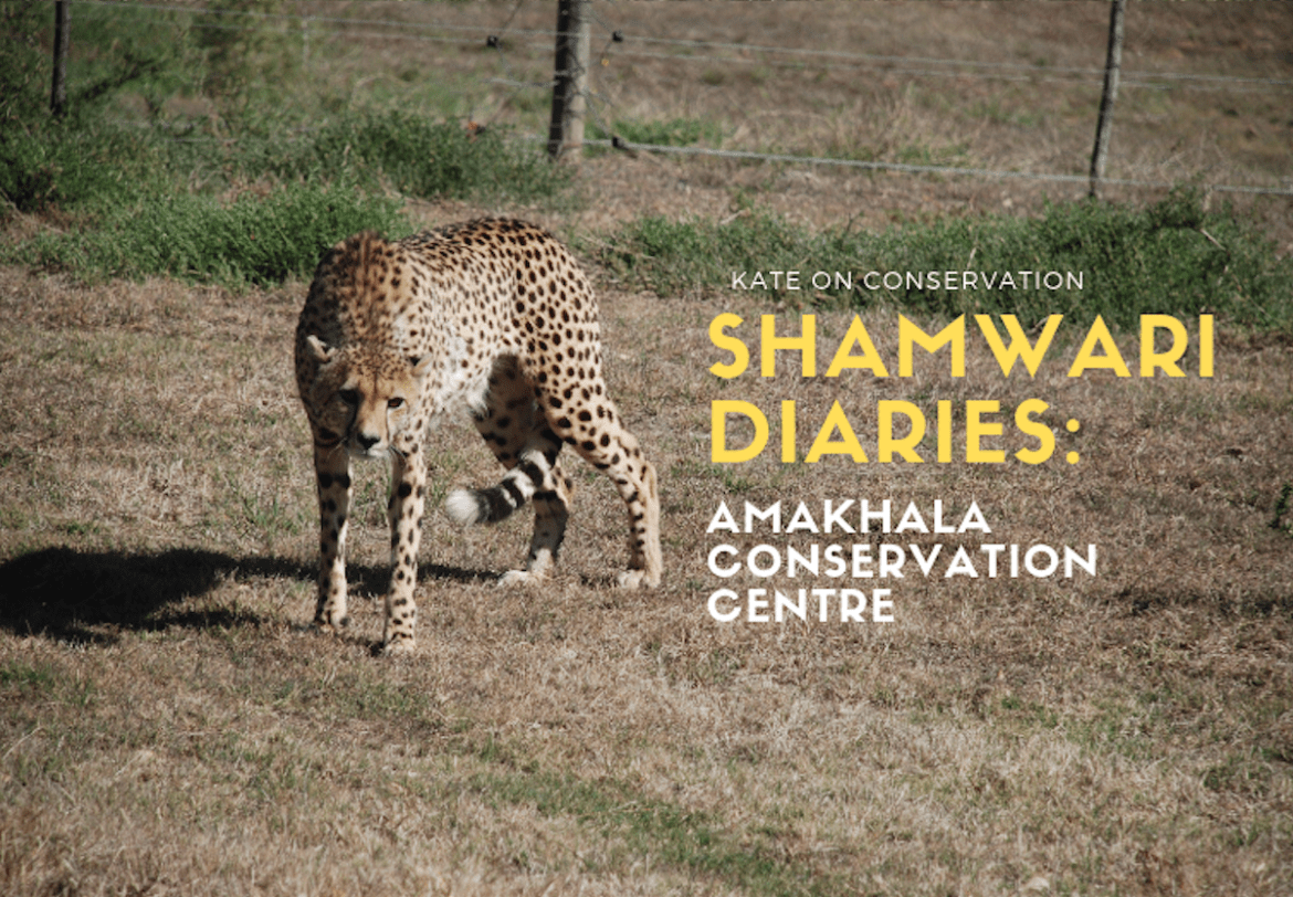 amakhala conservation centre title card