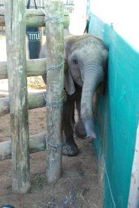 baby-elephant-at-shamwari-rescue-centre