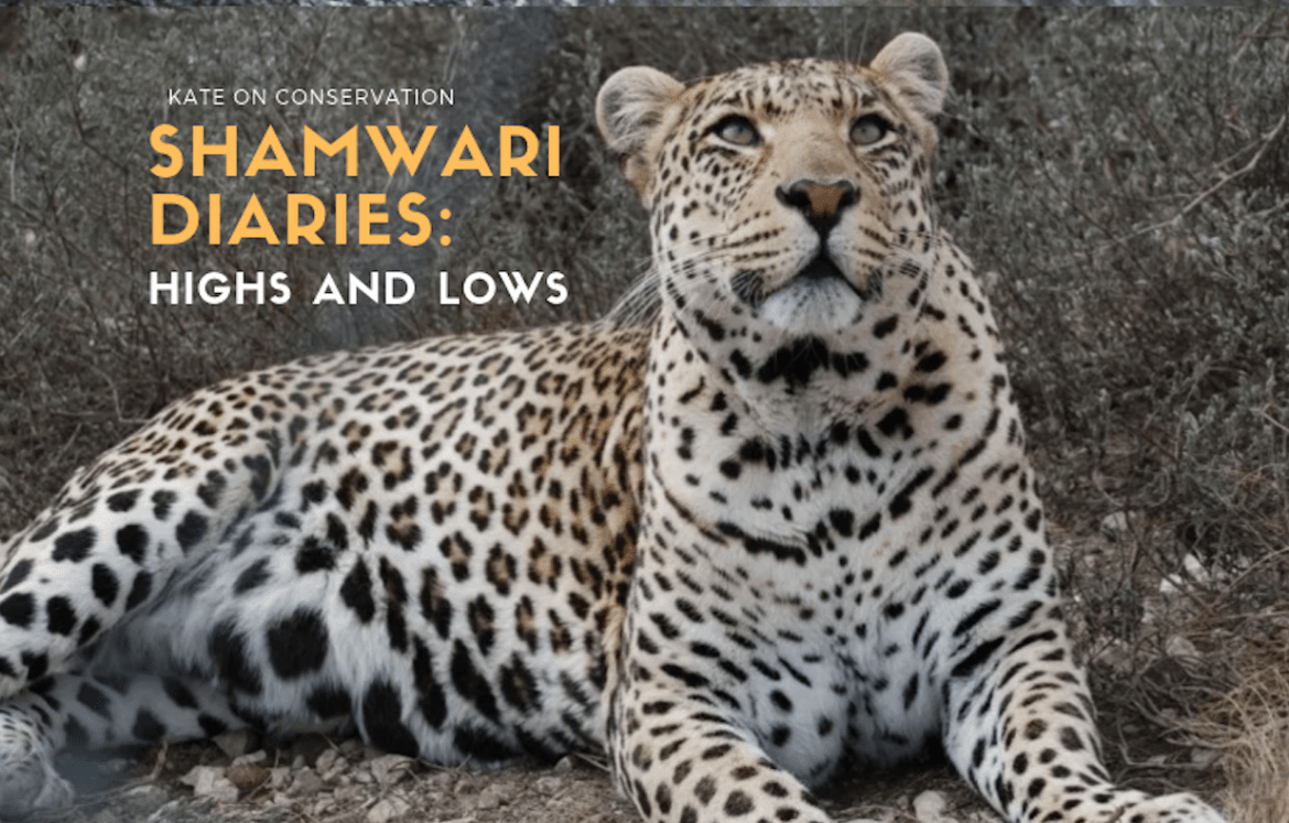 Shamwari Diaries: Act 4 Scene 4 — Highs, lows and watering holes