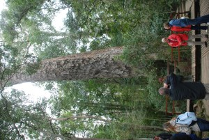 largest-tree-in-south-africa-people-near-the-base