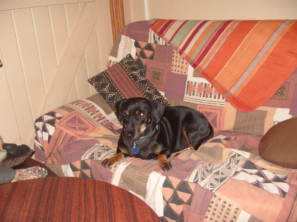 Odie-the-house-dog-at-sandflats-Amakhala-Game-Reserve