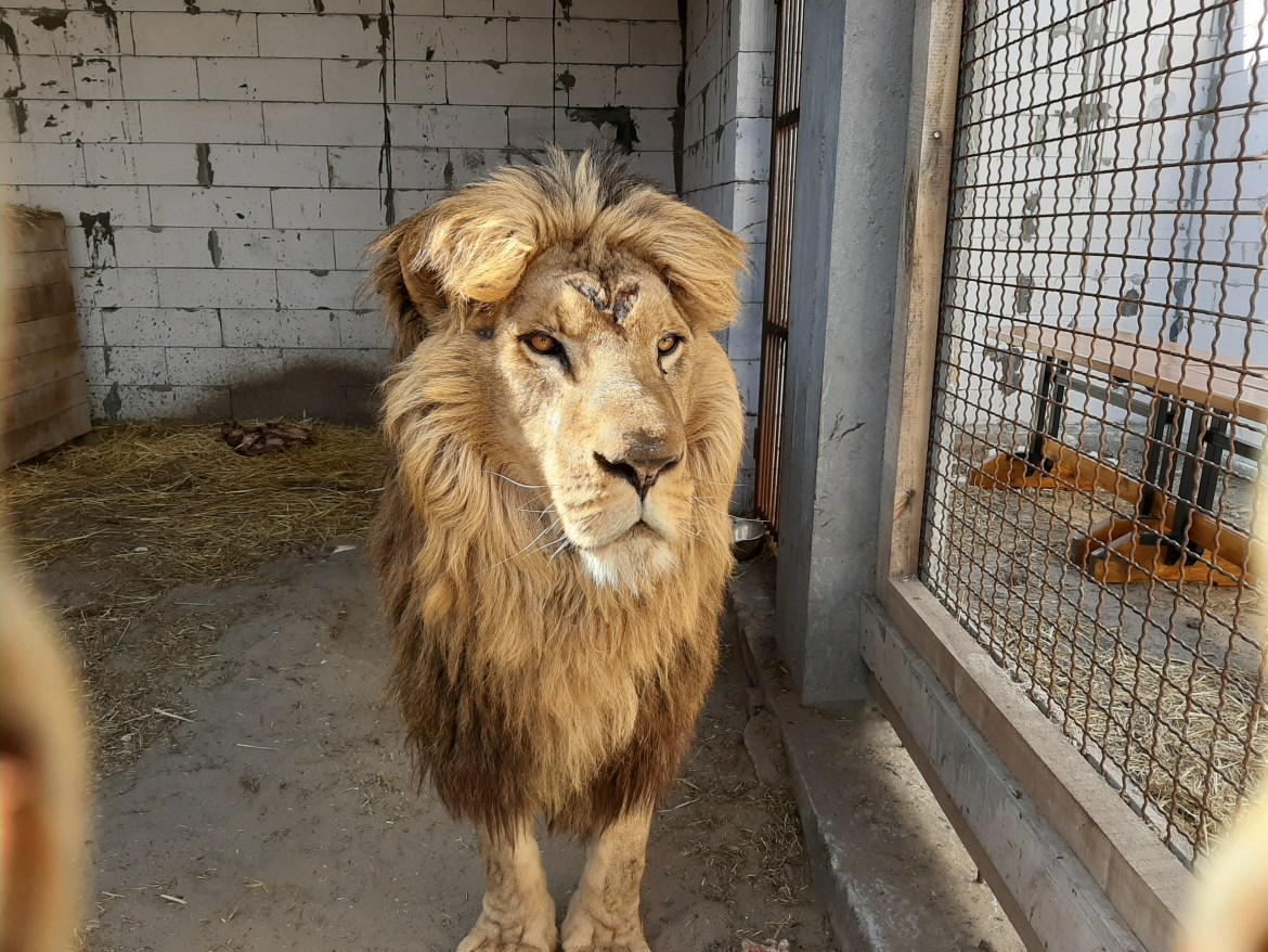 Facebook group rallies to  free forgotten lions in Ukraine