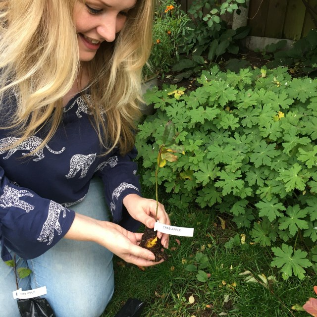 big climate fightback - kate on conservation with crab apple sapling