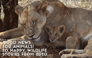Good news for animals 20 happy wildlife stories from 2020 title card