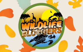 wildlife blogger crowd header new
