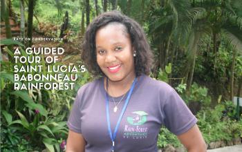 A guided tour of saint lucias rainforest