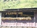 Nepal 2008 2 611