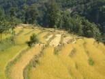 Nepal 2008 3 266