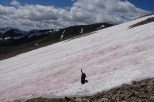 Mt Elbert