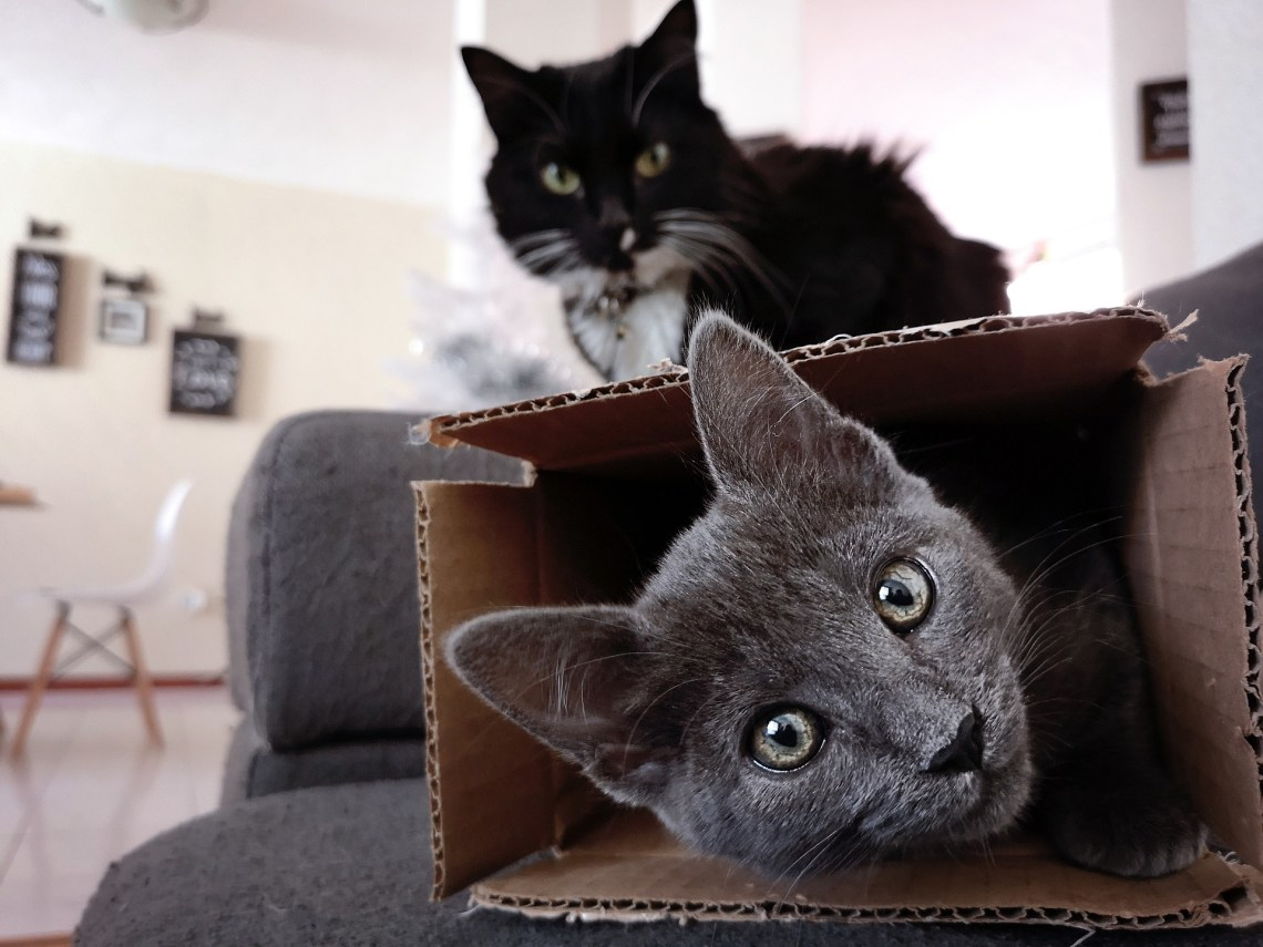 Moving House Checklist For Kids And Pets