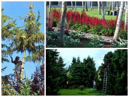 Kolaż przedstawiający podstawowe usługi firmy Kater: wycinkę drzew, zakładanie ogrodów oraz pielęgnację ogrodów .