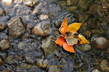 Toad on Sugar Gum Leaf by Melissa Terlizzi