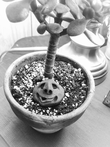 Face Rock in Mini Jade Tree Example by Katie Oskin