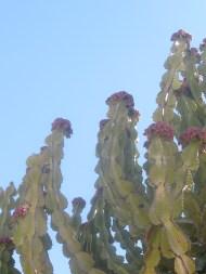 Cacti are everywhereeee