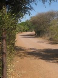 Beautiful pathway during my walk