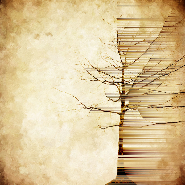 Don T Fall In Love Wallpaper Treescapes