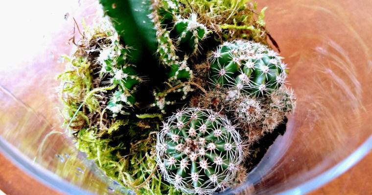 Bunnies and Cacti : DIY Terrarium