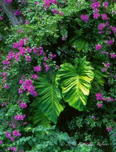 Coral-Gables-Garden-2
