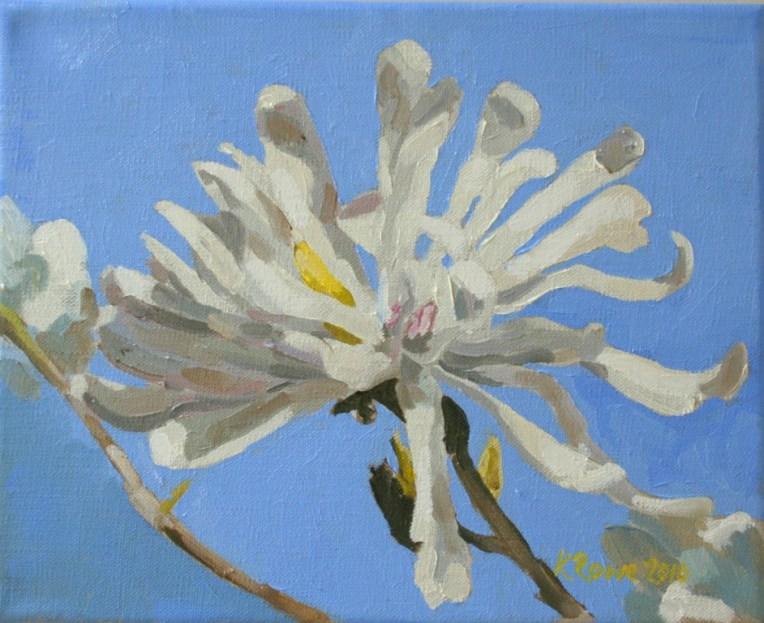 Magnolia Stellata 35x32cm framed, £175