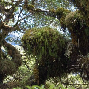 omszałe drzewa nad rzeką Camelot
