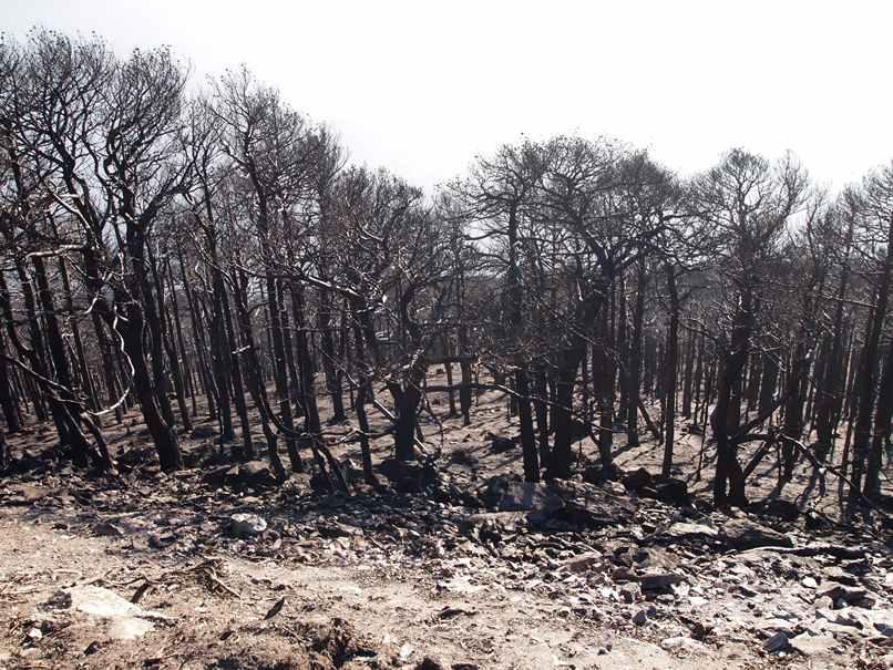 Incendi-boschi-Valsusa-ottobre-2017-11-min