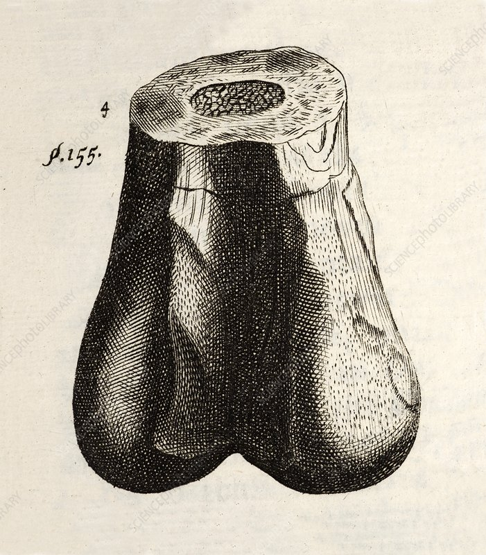 1677 First ever dinosaur bone Robert Plot