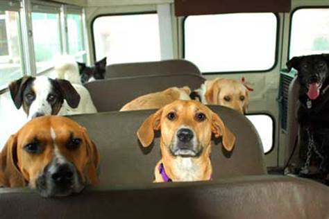 071218-dogs-on-bus-hmed-6p.grid-6x2