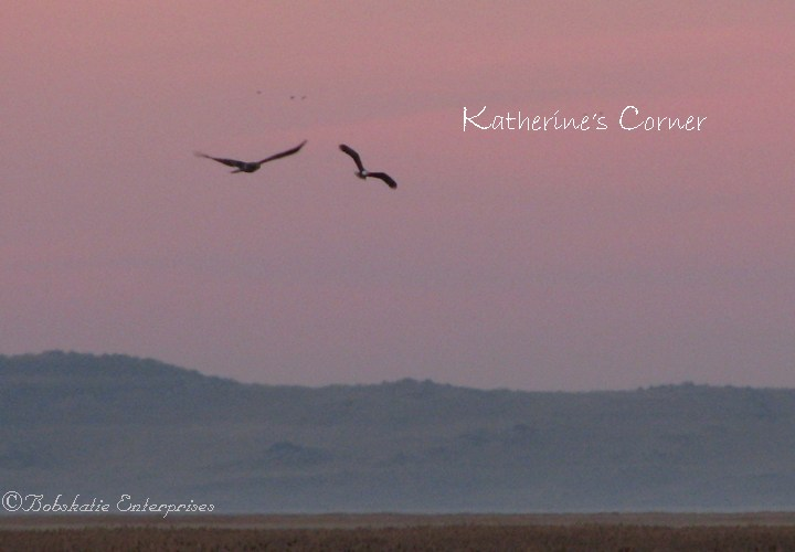 eagles in flight sunrise