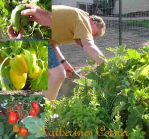 gardening for stress relief katherines corner