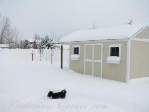 izzy walks a snowy path